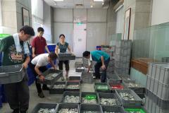 日本學者整理林永村先生所收集之破片標本